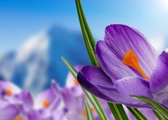 مهمترین خواص زعفران برای سلامتی انسان چیست؟